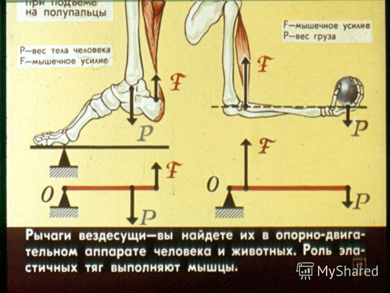 За какую из ниток надо потянуть, чтобы катушка покатилась вправо? А 1 В 1 или 2 Е катушка не может покатиться вправо С 3 D За любую 1 2 3 С 3