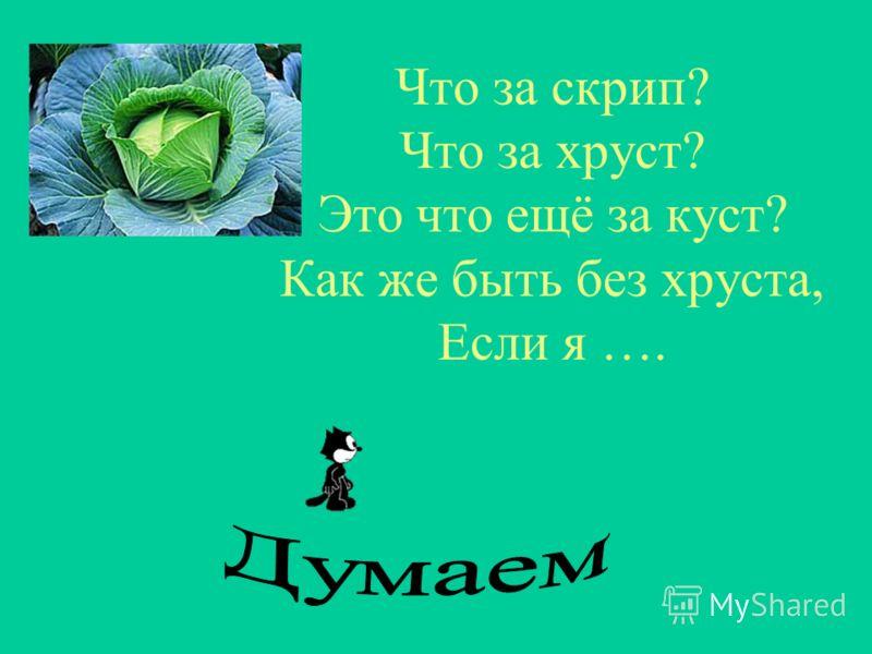 И зелен, и густ На грядке вырос куст. Покопай немножко: Под кустом….