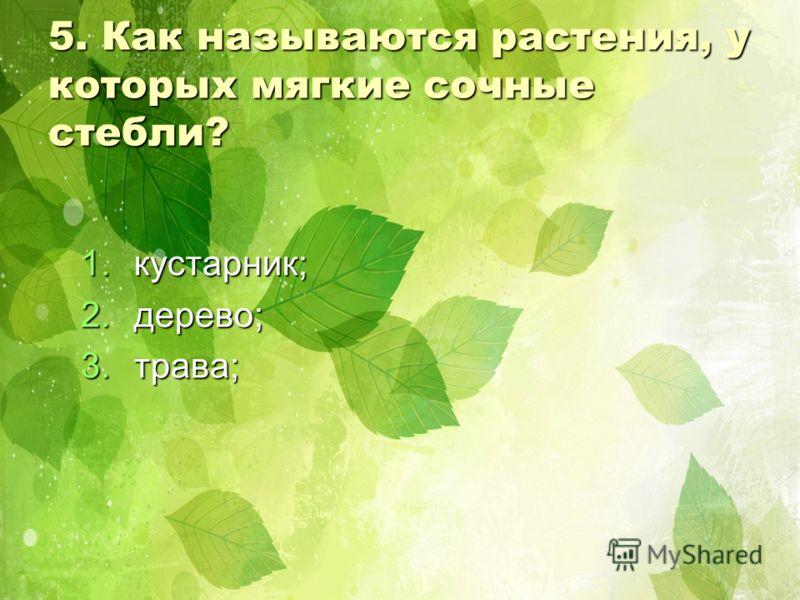 5. Как называются растения, у которых мягкие сочные стебли? 1.к устарник; 2.д ерево; 3.т рава;