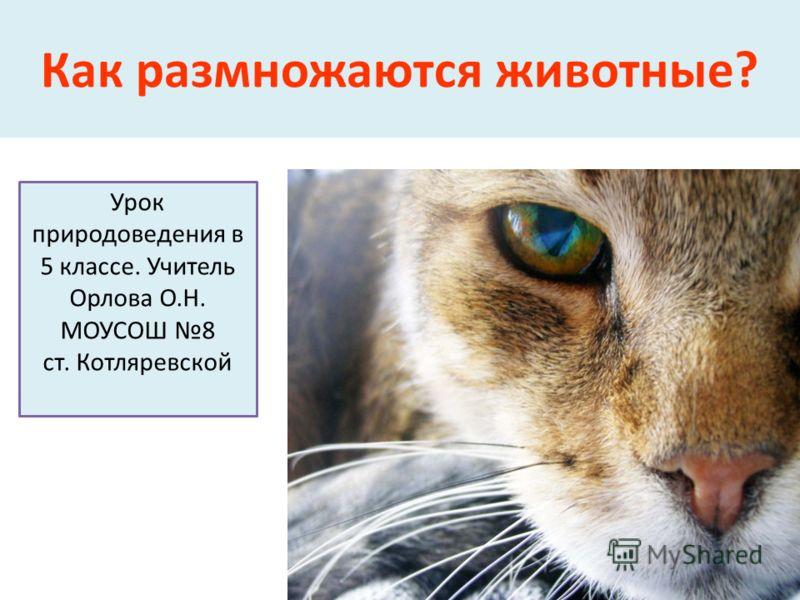 Как размножаются животные? Урок природоведения в 5 классе. Учитель Орлова О.Н. МОУСОШ 8 ст. Котляревской