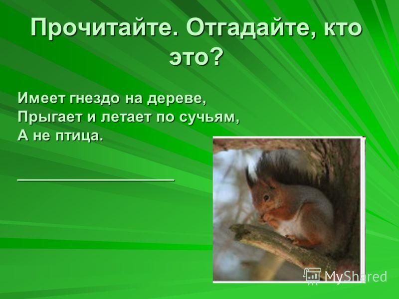 Прочитайте. Отгадайте, кто это? Имеет гнездо на дереве, Прыгает и летает по сучьям, А не птица. __________________ ?