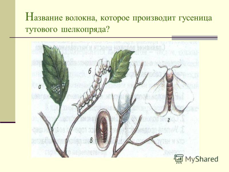 Н азвание волокна, которое производит гусеница тутового шелкопряда?