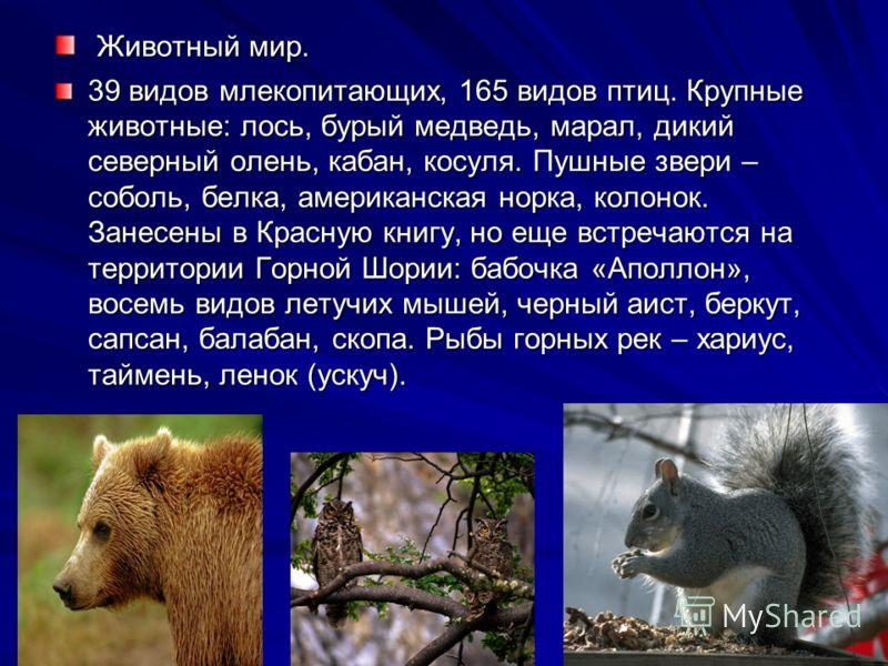 Животный мир. Животный мир. 39 видов млекопитающих, 165 видов птиц. Крупные животные: лось, бурый медведь, марал, дикий северный олень, кабан, косуля. Пушные звери – соболь, белка, американская норка, колонок. Занесены в Красную книгу, но еще встреча