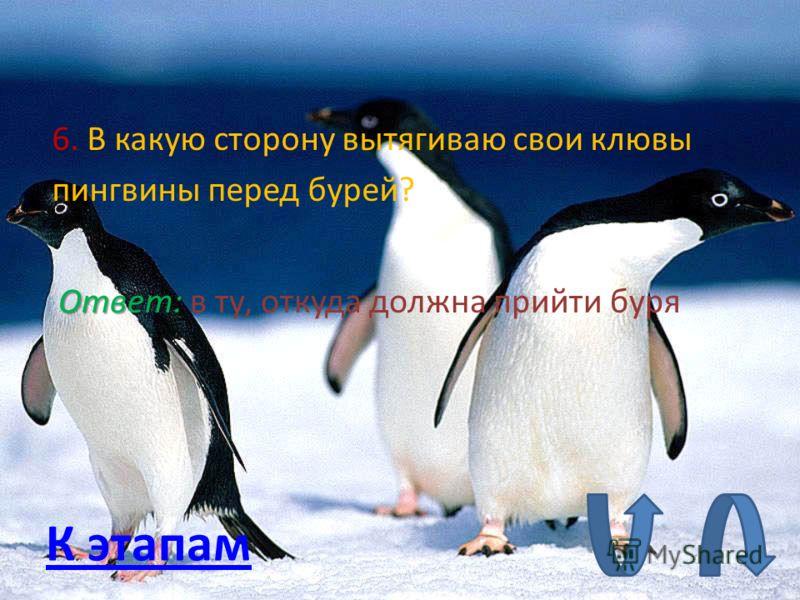 6. В какую сторону вытягиваю свои клювы пингвины перед бурей? Ответ: в ту, откуда должна прийти буря К этапам