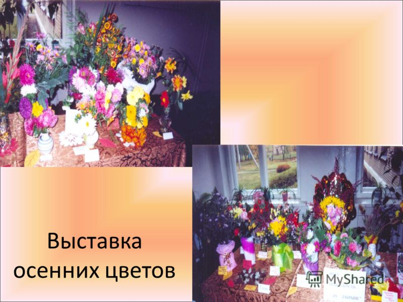 Выставка осенних цветов