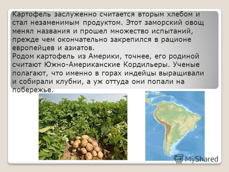 Картофель заслуженно считается вторым хлебом и стал незаменимым продуктом. Этот заморский овощ менял названия и прошел множество испытаний, прежде чем окончательно закрепился в рационе европейцев и азиатов. Родом картофель из Америки, точнее, его род