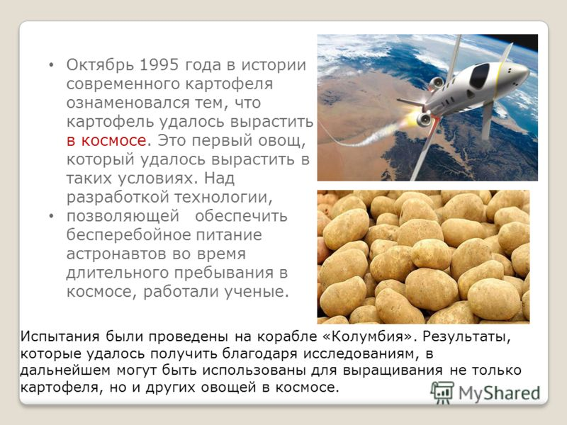 Октябрь 1995 года в истории современного картофеля ознаменовался тем, что картофель удалось вырастить в космосе. Это первый овощ, который удалось вырастить в таких условиях. Над разработкой технологии, позволяющей обеспечить бесперебойное питание аст