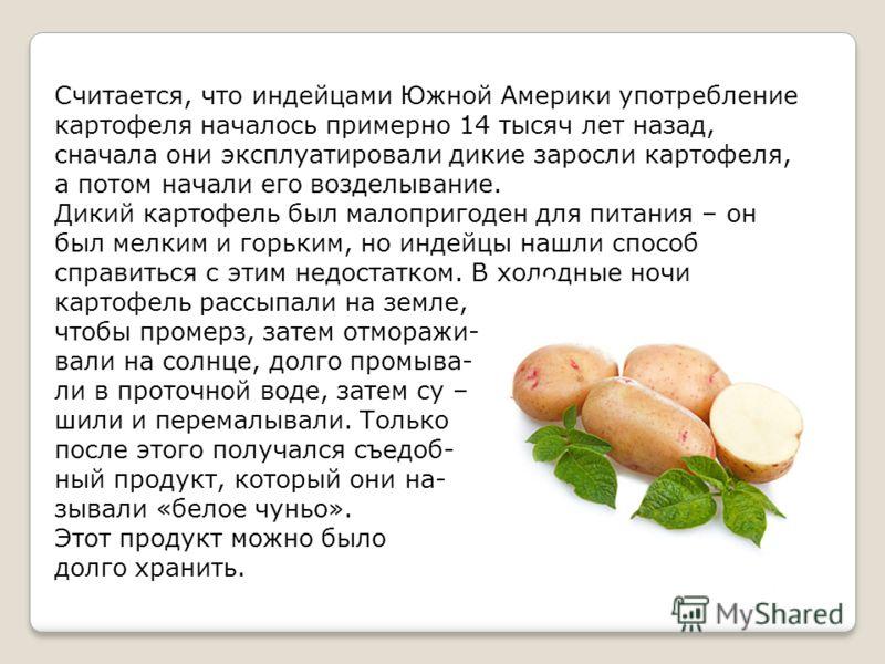 Считается, что индейцами Южной Америки употребление картофеля началось примерно 14 тысяч лет назад, сначала они эксплуатировали дикие заросли картофеля, а потом начали его возделывание. Дикий картофель был малопригоден для питания – он был мелким и г