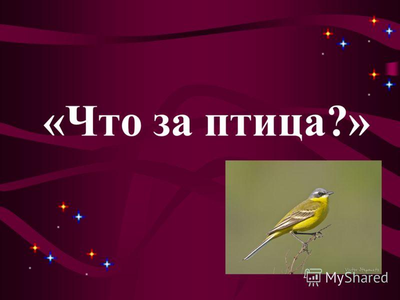 «Что за птица?»