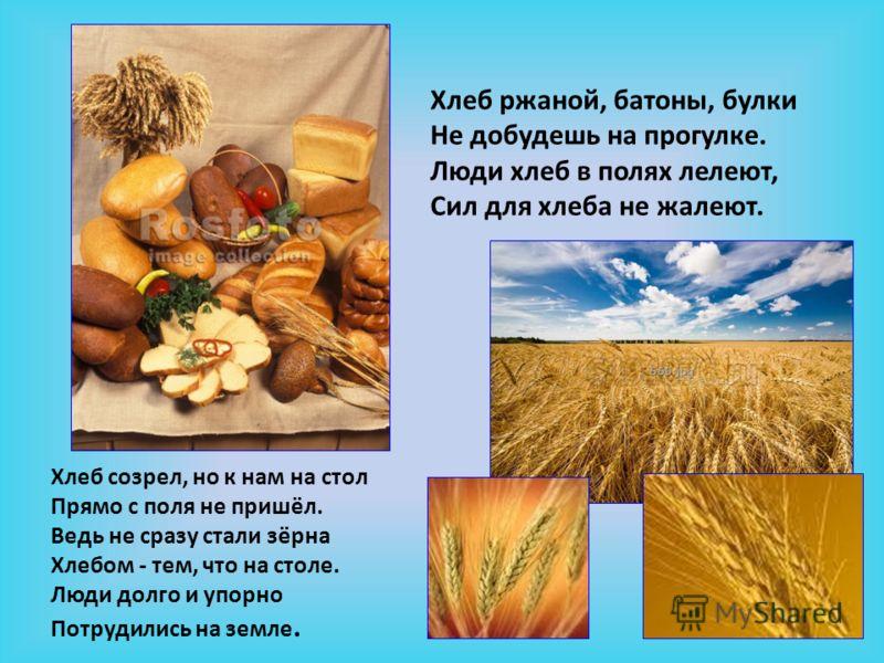 Хлеб ржаной, батоны, булки Не добудешь на прогулке. Люди хлеб в полях лелеют, Сил для хлеба не жалеют. Хлеб созрел, но к нам на стол Прямо с поля не пришёл. Ведь не сразу стали зёрна Хлебом - тем, что на столе. Люди долго и упорно Потрудились на земл