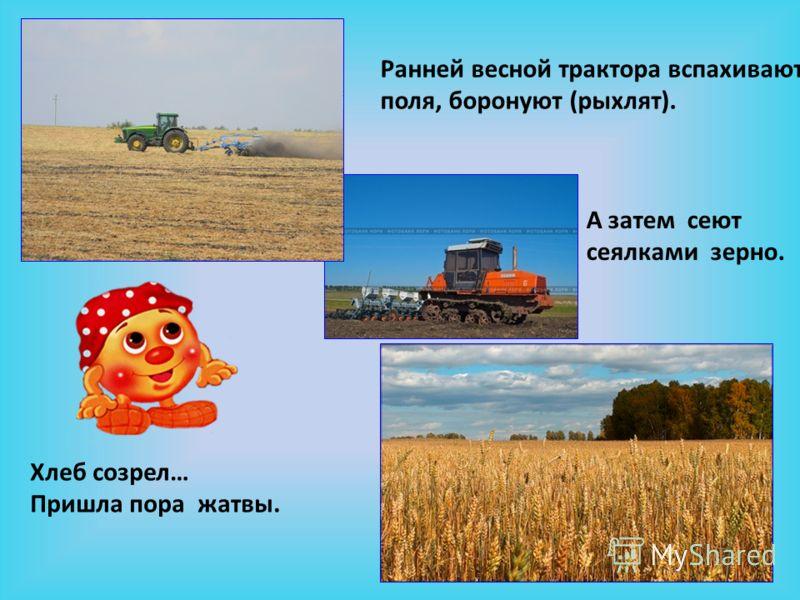 Ранней весной трактора вспахивают поля, боронуют (рыхлят). А затем сеют сеялками зерно. Хлеб созрел… Пришла пора жатвы.