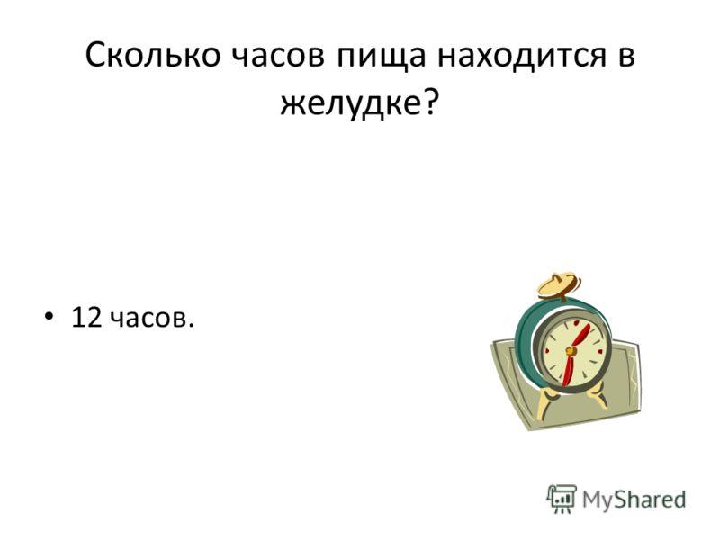 Сколько часов пища находится в желудке? 12 часов.