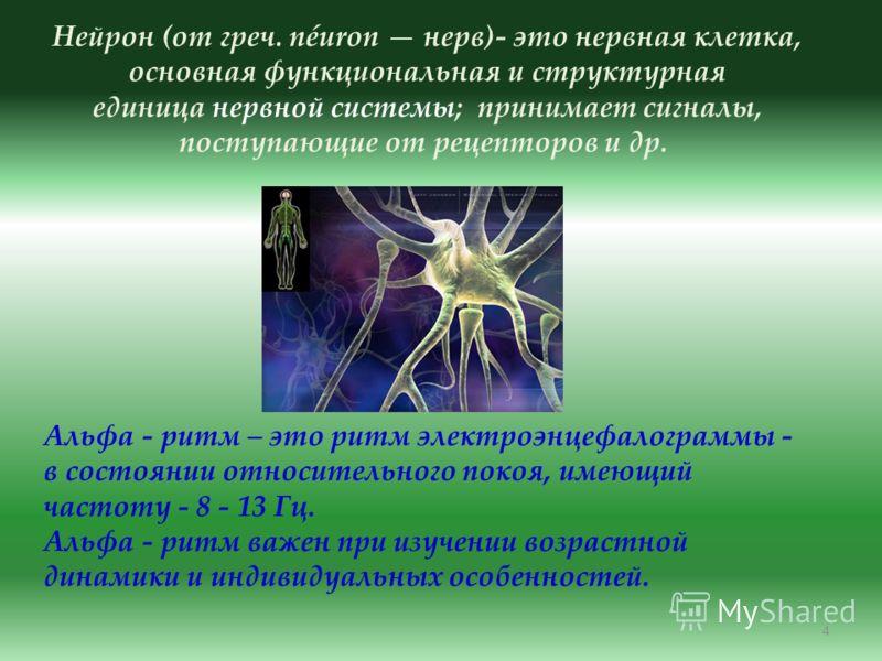 4 Нейрон (от греч. néuron нерв)- это нервная клетка, основная функциональная и структурная единица нервной системы; принимает сигналы, поступающие от рецепторов и др. Альфа - ритм – это ритм электроэнцефалограммы - в состоянии относительного покоя, и