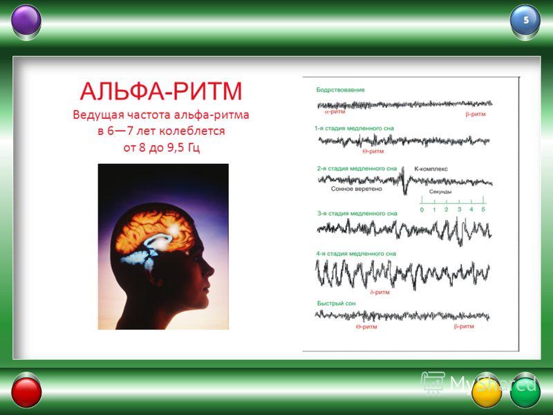 АЛЬФА-РИТМ Ведущая частота альфа-ритма в 67 лет колеблется от 8 до 9,5 Гц
