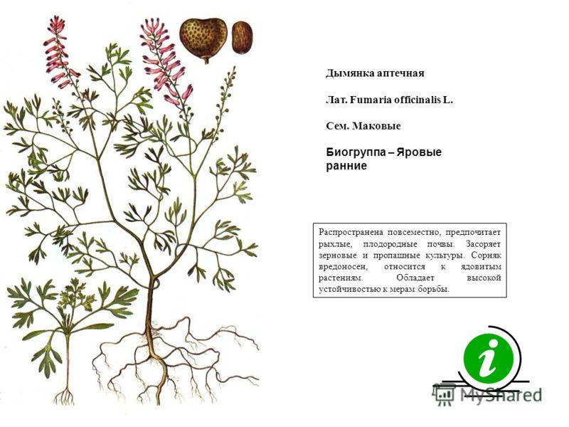 Распространена повсеместно, предпочитает рыхлые, плодородные почвы. Засоряет зерновые и пропашные культуры. Сорняк вредоносен, относится к ядовитым растениям. Обладает высокой устойчивостью к мерам борьбы. Дымянка аптечная Лат. Fumaria officinalis L.