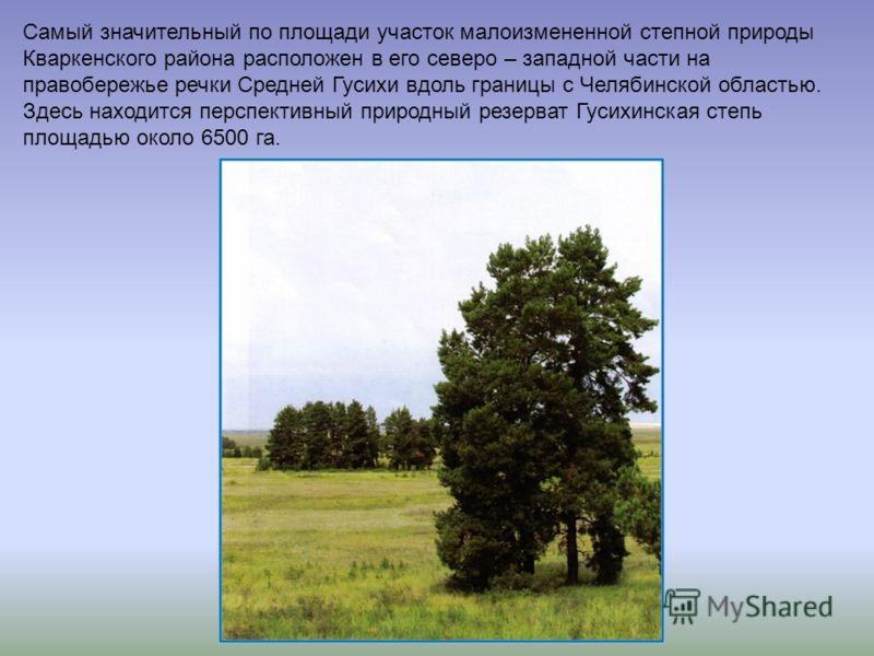 Самый значительный по площади участок малоизмененной степной природы Кваркенского района расположен в его северо – западной части на правобережье речки Средней Гусихи вдоль границы с Челябинской областью. Здесь находится перспективный природный резер