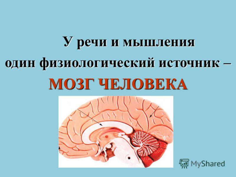 У речи и мышления один физиологический источник – МОЗГ ЧЕЛОВЕКА
