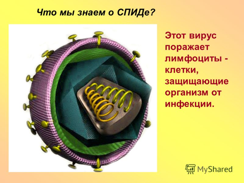 Что мы знаем о СПИДе? Этот вирус поражает лимфоциты - клетки, защищающие организм от инфекции.