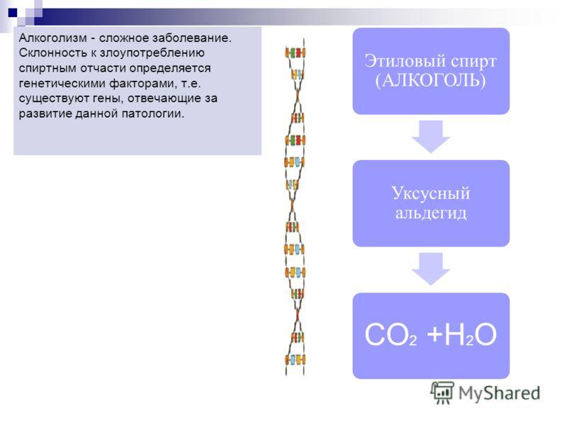 Этиловый спирт (АЛКОГОЛЬ) Уксусный альдегид СО 2 +Н 2 О Алкоголизм - сложное заболевание. Склонность к злоупотреблению спиртным отчасти определяется генетическими факторами, т.е. существуют гены, отвечающие за развитие данной патологии.