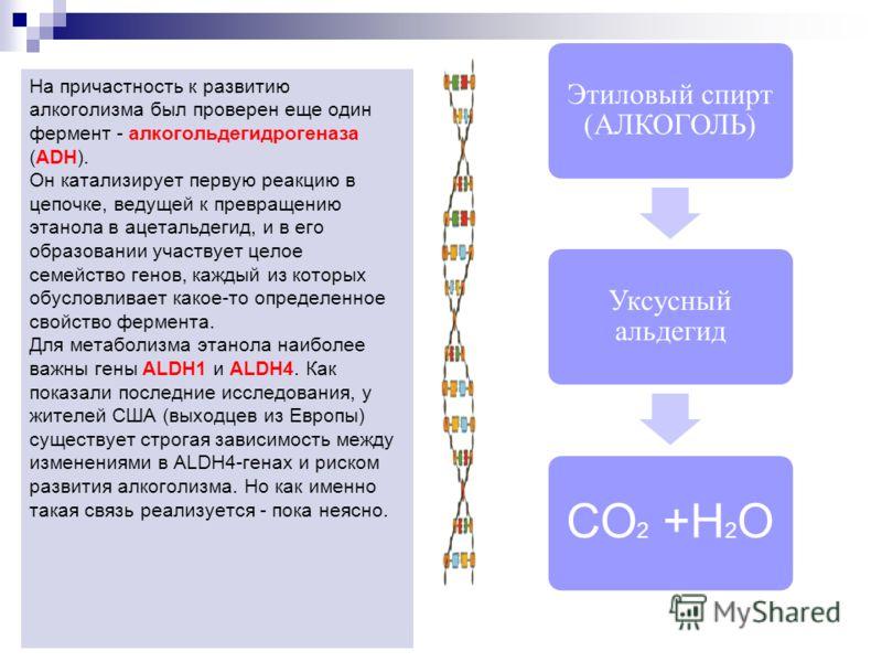 Этиловый спирт (АЛКОГОЛЬ) Уксусный альдегид СО 2 +Н 2 О На причастность к развитию алкоголизма был проверен еще один фермент - алкогольдегидрогеназа (АDН). Он катализирует первую реакцию в цепочке, ведущей к превращению этанола в ацетальдегид, и в ег