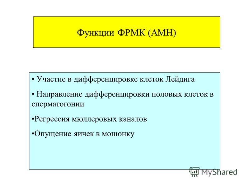 Функции ФРМК (AMH) Участие в дифференцировке клеток Лейдига Направление дифференцировки половых клеток в сперматогонии Регрессия мюллеровых каналов Опущение яичек в мошонку