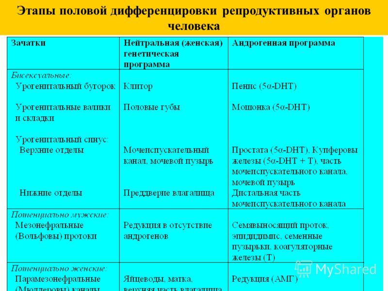 Этапы половой дифференцировки репродуктивных органов человека