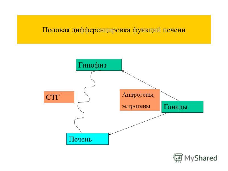 Половая дифференцировка функций печени Гипофиз Гонады Печень СТГ Андрогены, эстрогены
