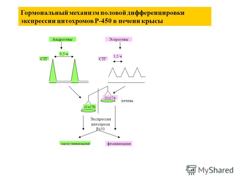 3,5 ч 1,5 ч СТГ STAT 5a STAT 5b СТГ печень Экспрессия цитохрома P450 маскулинизацияфеминизация АндрогеныЭстрогены Гормональный механизм половой дифференцировки экспрессии цитохромов P-450 в печени крысы