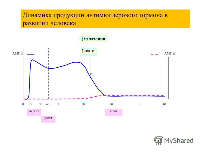 годы 040 роды недели 1330210203040 лептин АМГ Динамика продукции антимюллерового гормона в развитии человека мелатонин лептин