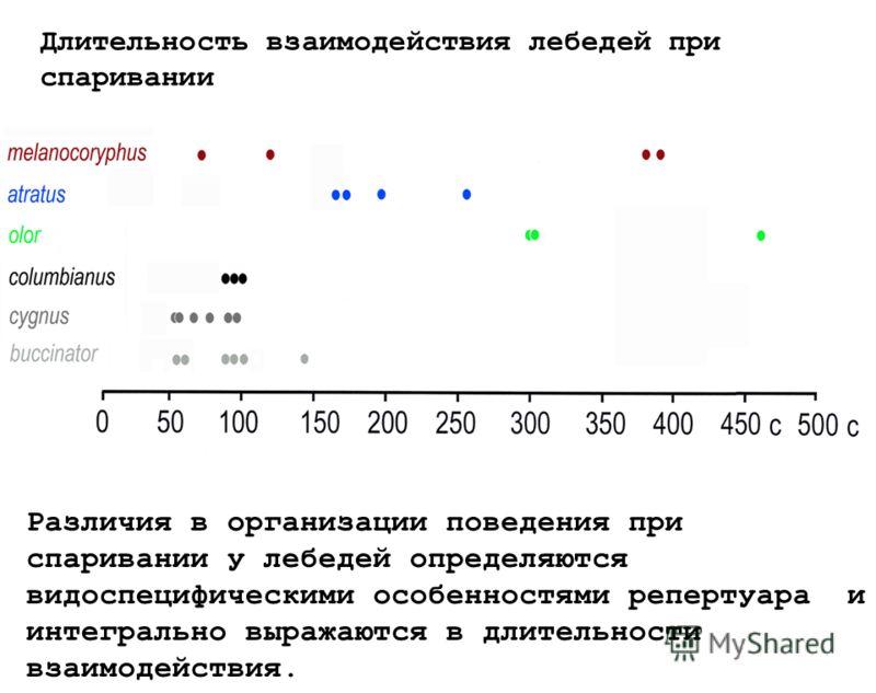 Длительность взаимодействия лебедей при спаривании Различия в организации поведения при спаривании у лебедей определяются видоспецифическими особенностями репертуара и интегрально выражаются в длительности взаимодействия.