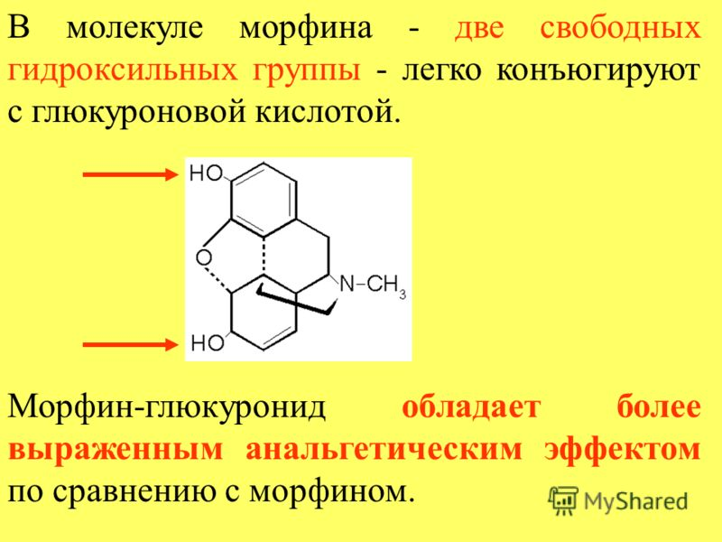 В молекуле морфина - две свободных гидроксильных группы - легко конъюгируют с глюкуроновой кислотой. Морфин-глюкуронид обладает более выраженным анальгетическим эффектом по сравнению с морфином.