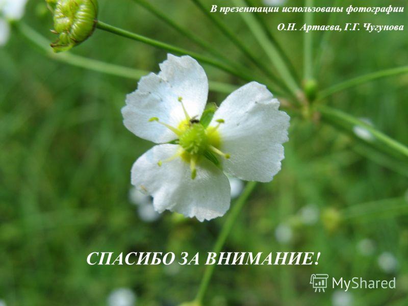 В презентации использованы фотографии О.Н. Артаева, Г.Г. Чугунова СПАСИБО ЗА ВНИМАНИЕ!