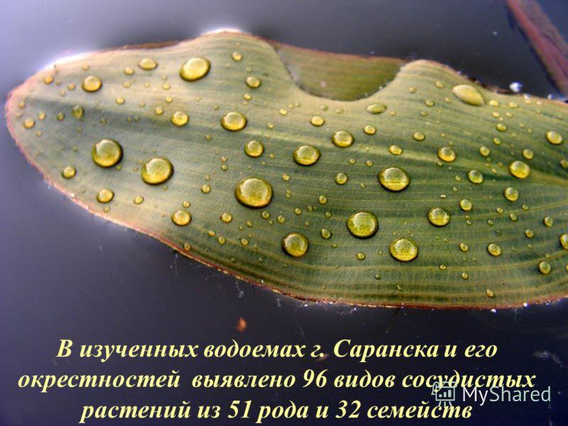 В изученных водоемах г. Саранска и его окрестностей выявлено 96 видов сосудистых растений из 51 рода и 32 семейств