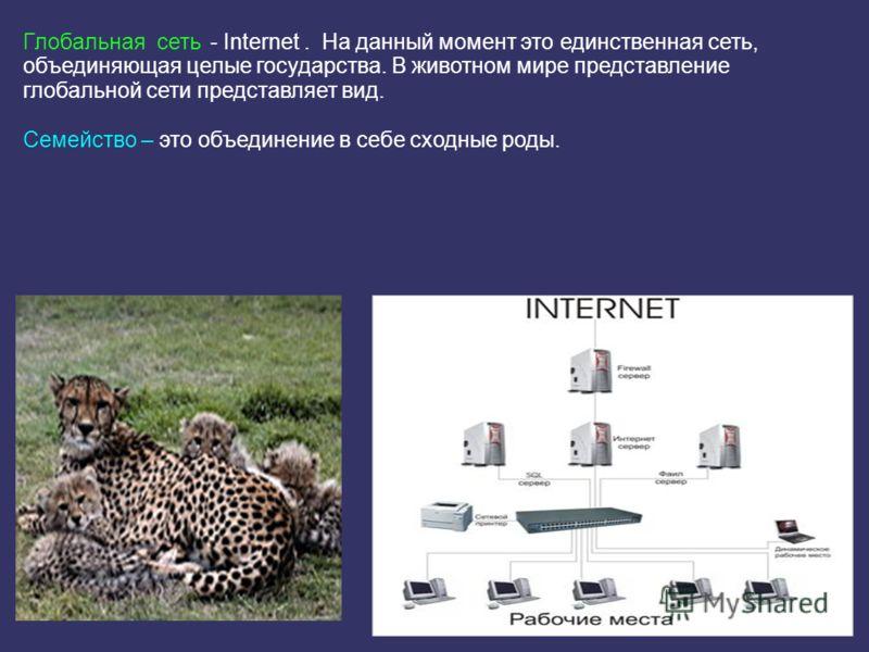 Глобальная сеть - Internet. На данный момент это единственная сеть, объединяющая целые государства. В животном мире представление глобальной сети представляет вид. Семейство – это объединение в себе сходные роды.