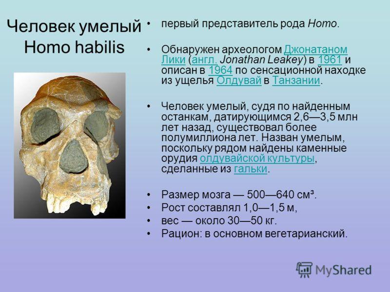 Человек умелый Homo habilis первый представитель рода Homo. Обнаружен археологом Джонатаном Лики (англ. Jonathan Leakey) в 1961 и описан в 1964 по сенсационной находке из ущелья Олдувай в Танзании.Джонатаном Ликиангл.19611964ОлдувайТанзании Человек у