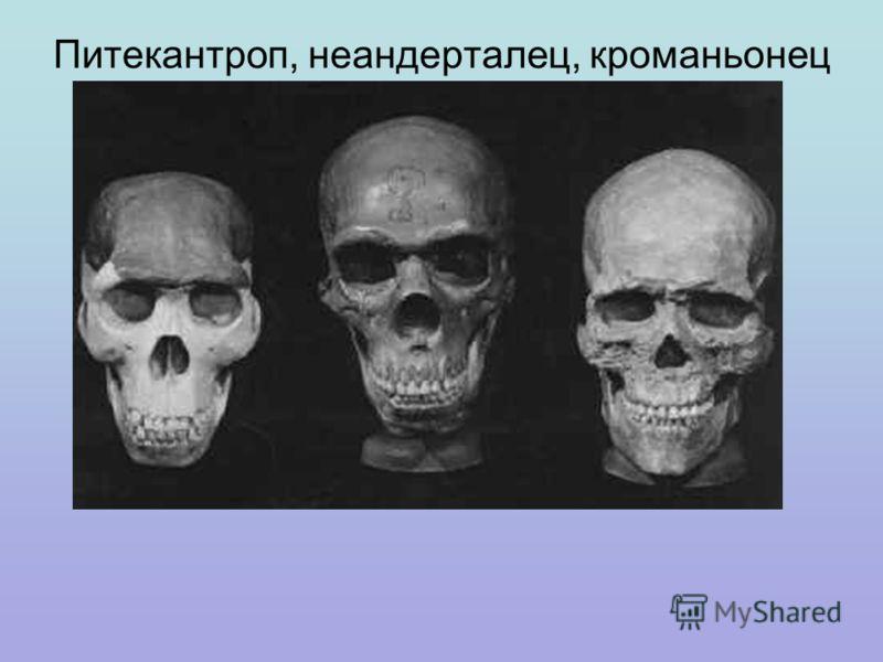 Питекантроп, неандерталец, кроманьонец