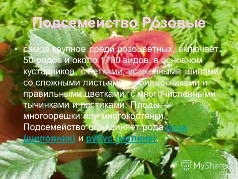 Подсемейство Розовые самое крупное среди розоцветных, включает 50 родов и около 1700 видов, в основном кустарников, с ветками, усаженными шипами, со сложными листьями и прилистниками и правильными цветками, с многочисленными тычинками и пестиками. Пл
