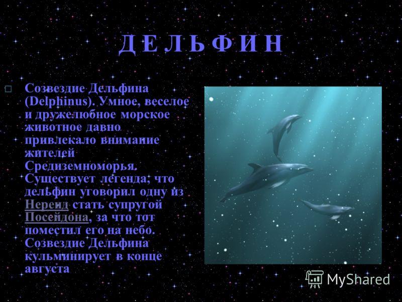 Д Е Л Ь Ф И Н Cозвездие Дельфина (Delphinus). Умное, веселое и дружелюбное морское животное давно привлекало внимание жителей Средиземноморья. Существует легенда, что дельфин уговорил одну из Нереид стать супругой Посейдона, за что тот поместил его н