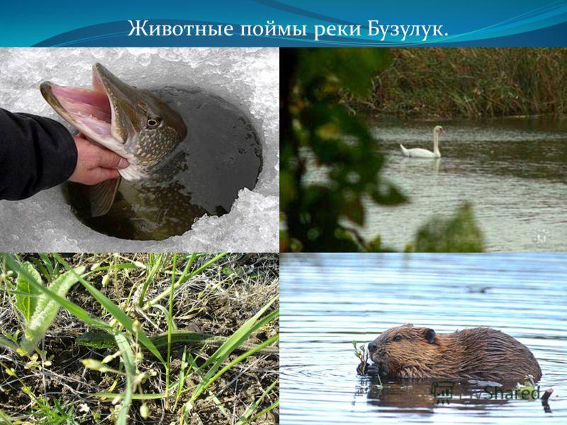 Животные поймы реки Бузулук.