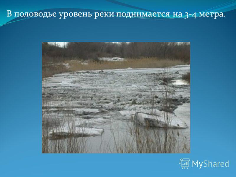 В половодье уровень реки поднимается на 3-4 метра.