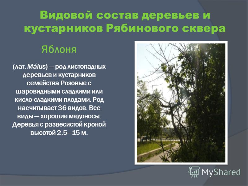 Яблоня (лат. Málus) род листопадных деревьев и кустарников семейства Розовые с шаровидными сладкими или кисло-сладкими плодами. Род насчитывает 36 видов. Все виды хорошие медоносы. Деревья с развесистой кроной высотой 2,515 м. Видовой состав деревьев