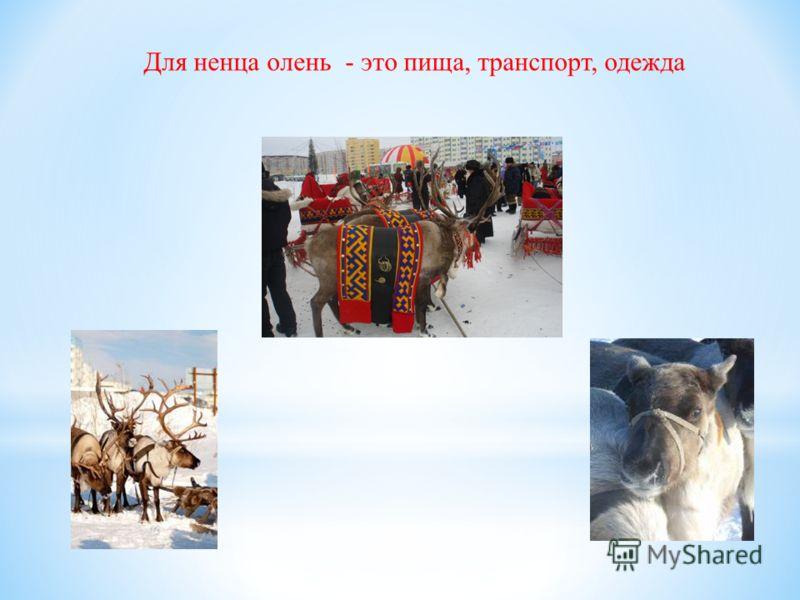 Для ненца олень - это пища, транспорт, одежда