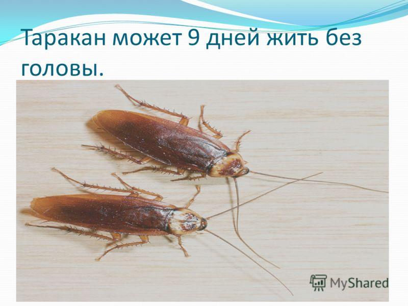 Таракан может 9 дней жить без головы.