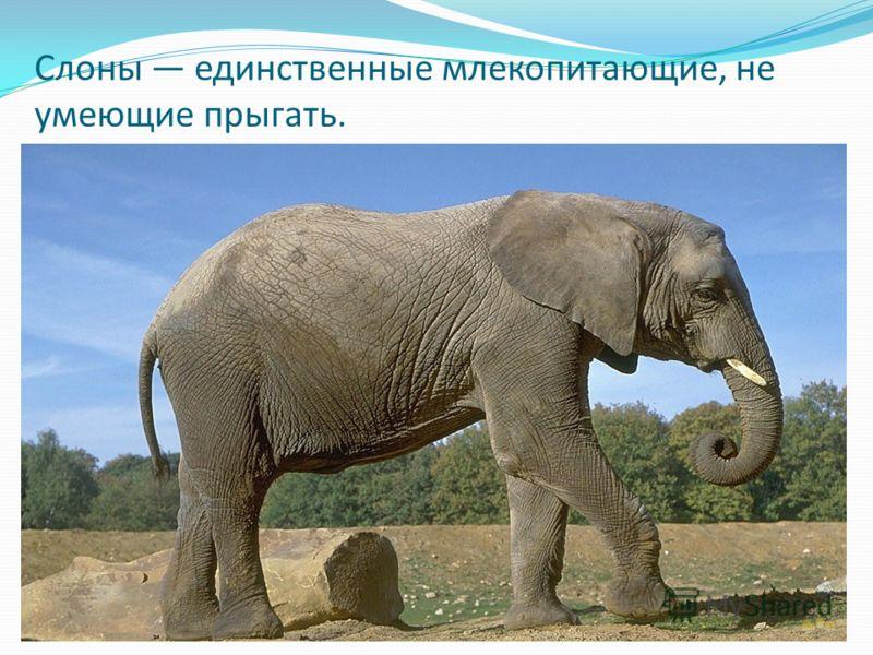 Слоны единственные млекопитающие, не умеющие прыгать.