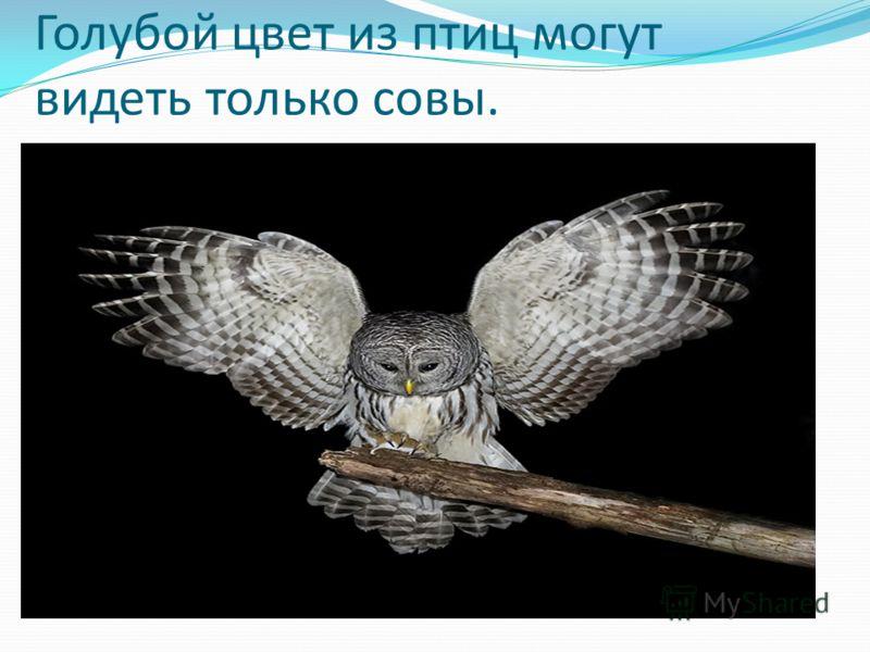 Голубой цвет из птиц могут видеть только совы.