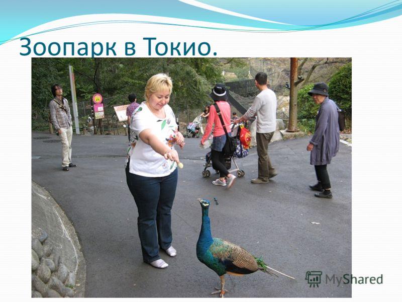 Зоопарк в Токио.