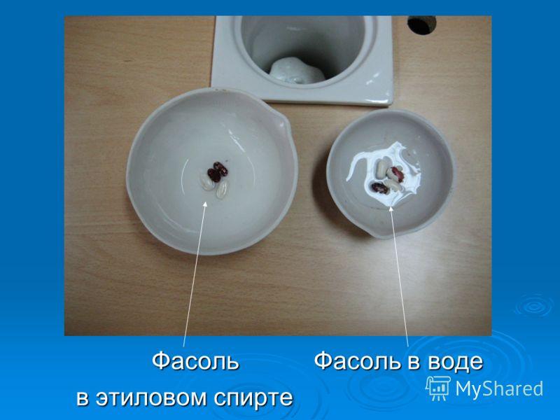 Фасоль Фасоль в воде Фасоль Фасоль в воде в этиловом спирте в этиловом спирте