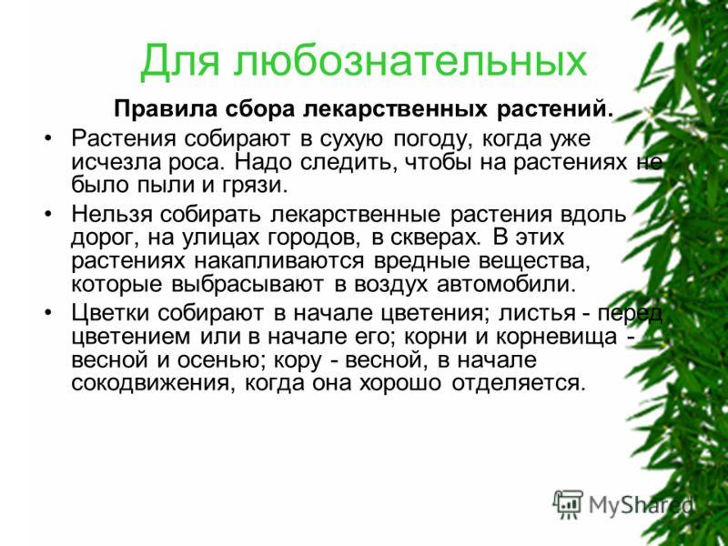 Для любознательных Правила сбора лекарственных растений. Растения собирают в сухую погоду, когда уже исчезла роса. Надо следить, чтобы на растениях не было пыли и грязи. Нельзя собирать лекарственные растения вдоль дорог, на улицах городов, в скверах