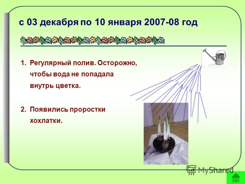 с 03 декабря по 10 января 2007-08 год 1.Регулярный полив. Осторожно, чтобы вода не попадала внутрь цветка. 2.Появились проростки хохлатки.