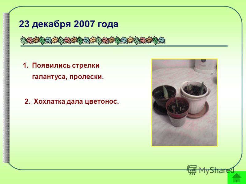 1.Появились стрелки галантуса, пролески. 23 декабря 2007 года 2.Хохлатка дала цветонос.